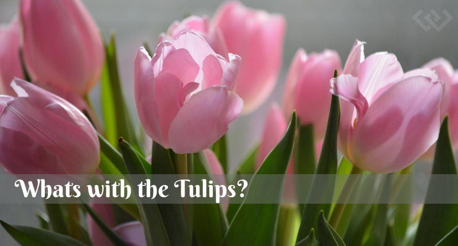 Whats with all the Tulips, Tulips, Flowers, Gardening, Celebrate, remember, heritage, events